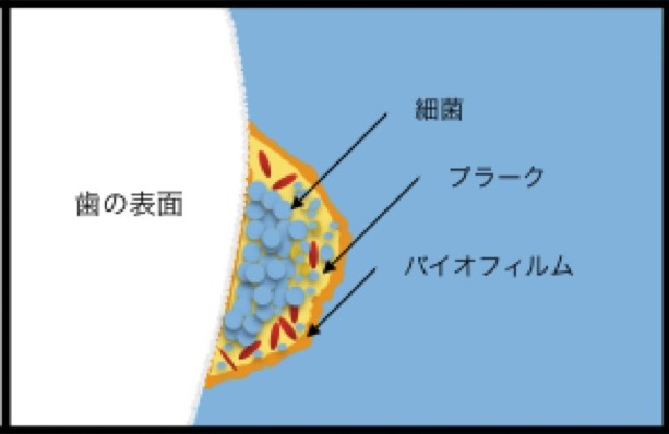 バイオフィルム.jpg